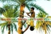 নবাবগঞ্জে শীতের সকালে খেজুরের রস সংগ্রহে ব্যস্ত গাছি