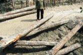 মোড়েলগঞ্জের গুলিশাখালী  গ্রাম থেকে লাখ টাকার সুন্দরী কাঠ উদ্ধার