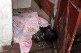 ঠাকুরগাঁওয়ে শহরের নিশ্চিন্তপুর এলাকায় এক মাদ্রাসার ছাত্রকে পুড়িয়ে হত্যা ৮জনকে আটক