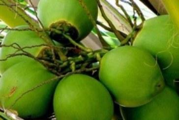 আসছে গরম, জেনে নিন ডাবের পানির উপকারীতা সম্পর্কে