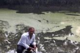 সিরাজদিখানে পুকুরে বিষ ঢেলে ৫০ হাজার মাছ নিধনের অভিযোগ