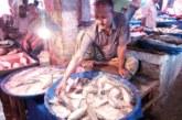 সাগরে মাছ থাকলেও নেই জেলে বাগেরহাটে পহেলা বৈশাখের চাহিদা মেটাতে মজুদকৃত ইলিশেই ভরসা ব্যবসায়ীদের