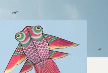 নীচে সমুদ্র আকাশে শুধু ঘুড়ি আর ঘুড়ি, দৃস্টি নন্দন ঘুড়িতে বর্নিল কুয়াকাটা সমুদ্র সৈকতের নীল আকাশ