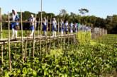 বাঁশের সাঁকোই ৪০টি গ্রামের ভরসা