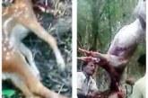 সাতক্ষীরা রেঞ্জ সুন্দরবন থেকে তিনটি অস্ত্র, তিনটি হরিনসহ দুই শিকারিকে আটক করেছে পুলিশ