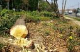 বিদ্যুতের তার টানার অজুহাতে মহাসড়কের লক্ষাধিক টাকার গাছ কর্তন