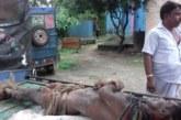 ভৈরবে কাঠুরিয়াকে বাড়ি থেকে ডেকে নিয়ে হত্যা করেছে দূর্বৃত্তরা