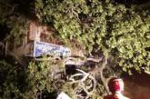 যশোর-বেনাপোল মহাসড়কে পুরানো গাছের ডাল ভেঙ্গে নিহত-১,আহত-১