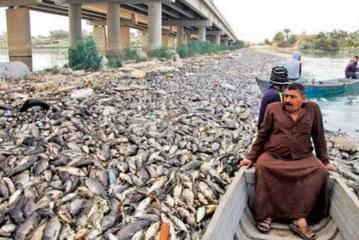 ইরাকে রহস্যময় কারণে হাজারো মাছ মরছে