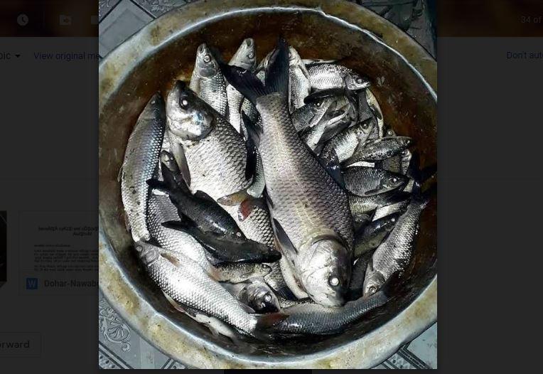 নবাবগঞ্জে পুকুরে বিষ প্রয়োগে মাছ নিধনের অভিযোগ