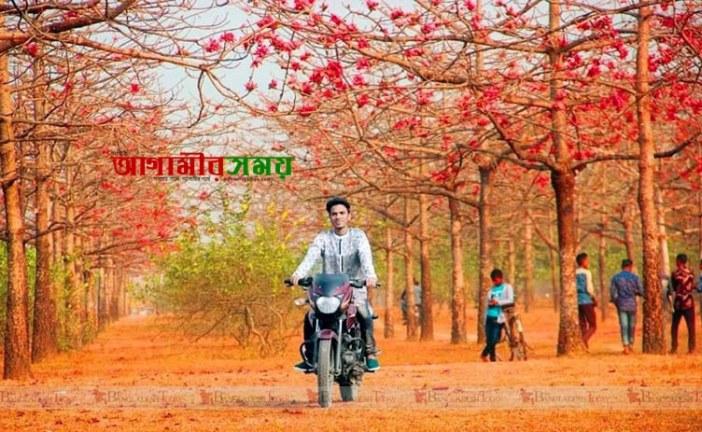 এ বসন্তে চলুন ঘুরে আসি সুনামগঞ্জের 'শিমুল বাগান' থেকে