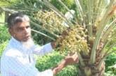 সৌদির খেজুর গাছ বাংলাদেশে ছড়িয়ে দিতে চান সোনারগাঁয়ের জীবন আলী