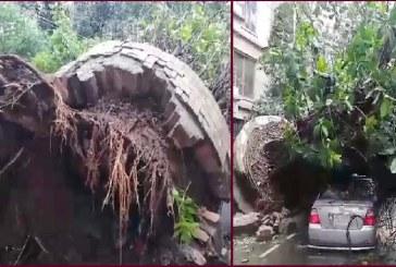রাজধানীর বনানীতে সড়কে উপড়ে পড়লো বিশাল বটগাছ