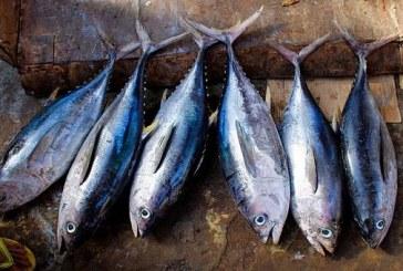 নিয়মিত মাছ খাওয়ার উপকারিতা