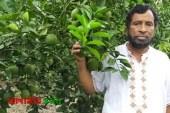 নান্দাইলে মাল্টা চাষে সফলতার স্বপ্ন দেখছেন হেলাল উদ্দিন