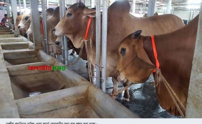 আসছে কোরবানীর প্রস্তুত রূপগঞ্জের খামারী