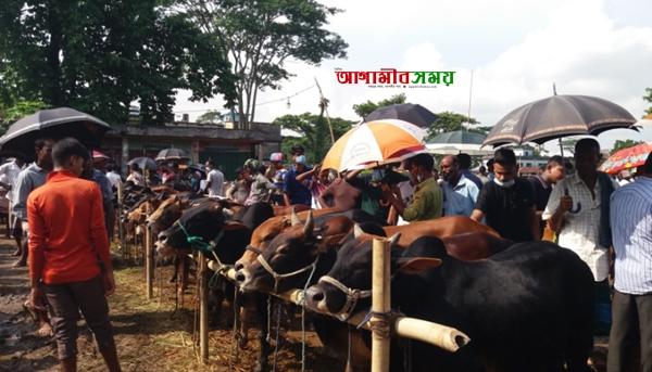 জগন্নাথপুরে কোরবানির পশুর হাট জমজমাট, উপেক্ষিত  স্বাস্থ্য বিধি