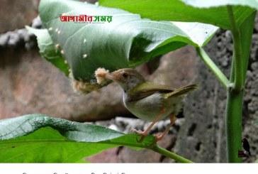 দর্জি পাখি টুনটুনি